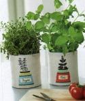 Herb pots 001